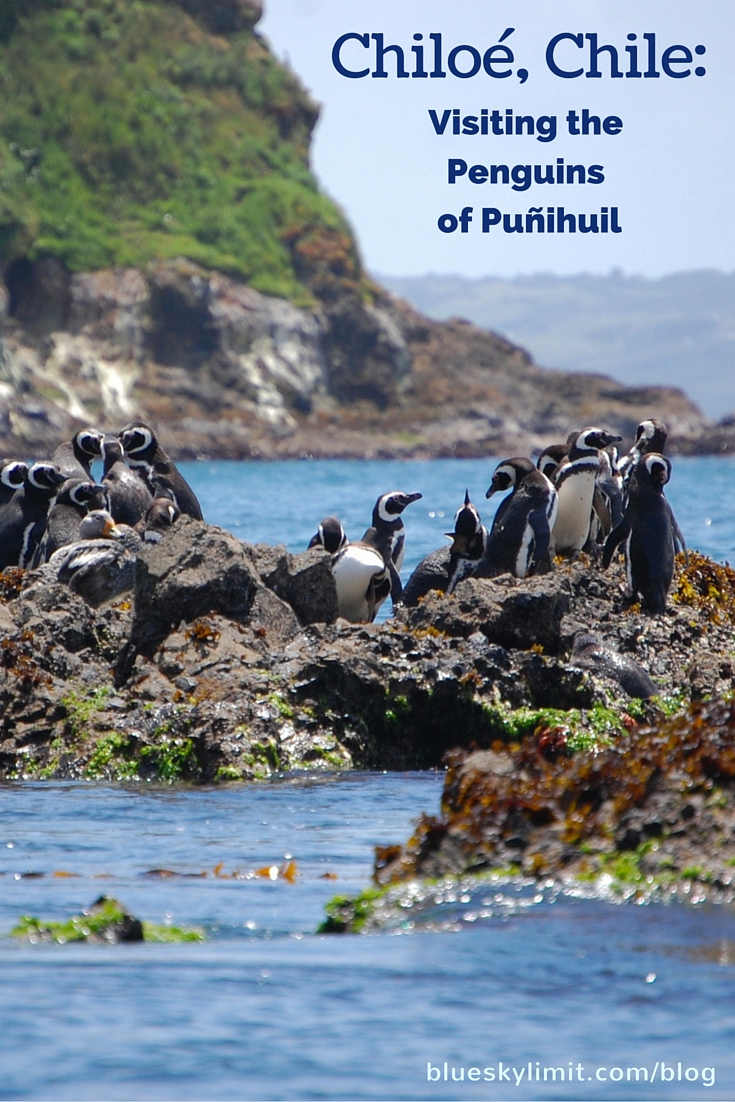 Chiloé, Chile: Visiting the Penguins of Puñihuil with Impressive ...